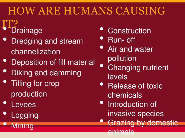 HOW ARE HUMANS CAUSING IT?