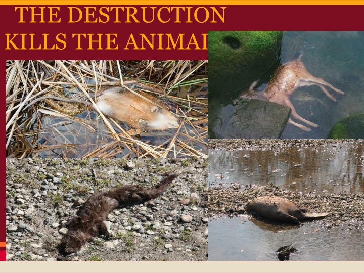 THE DESTRUCTION KILLS THE ANIMALS!!! :(