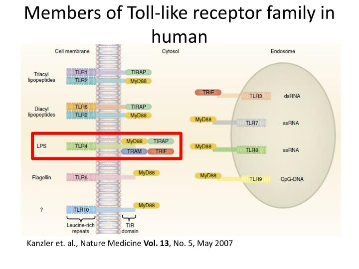 Members of Toll-like receptor family in human