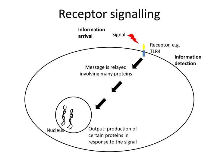 Receptor signalling