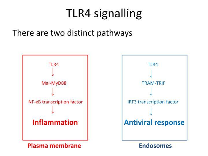 TLR4 signalling