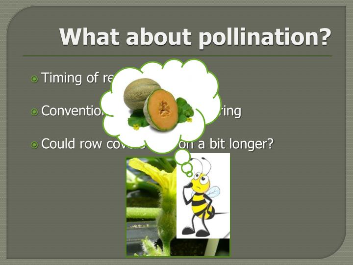 What about pollination?
