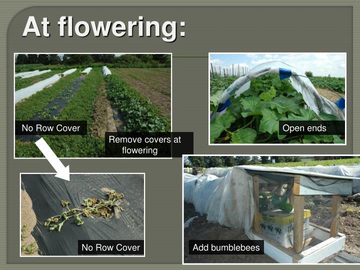 At flowering: