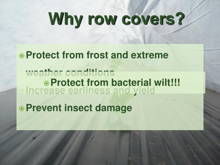 Why row covers?