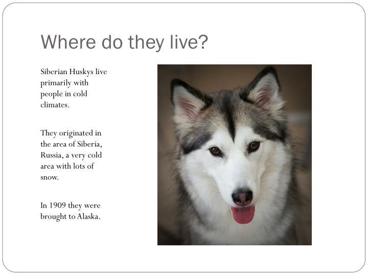Husky Time Excursions PowerPoint Presentation, PPT - DocSlides