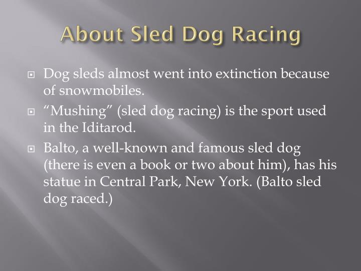 About Sled Dog Racing