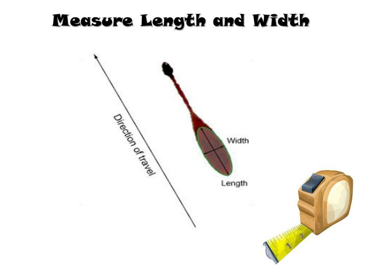 Measure Length and Width