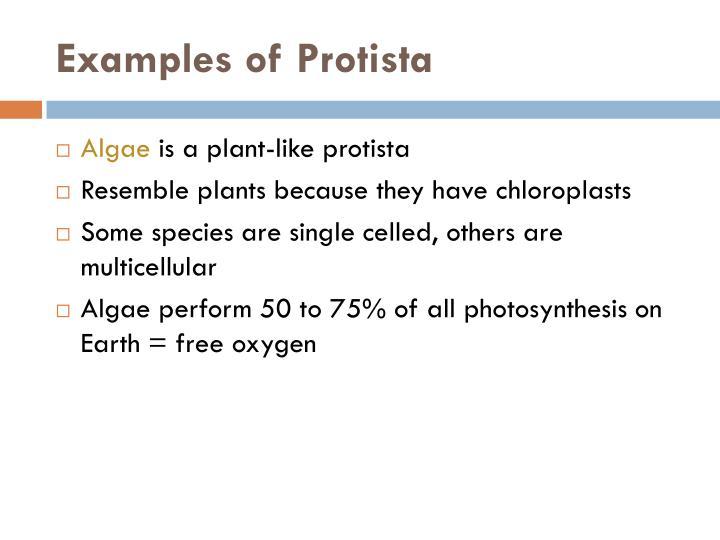Examples of Protista