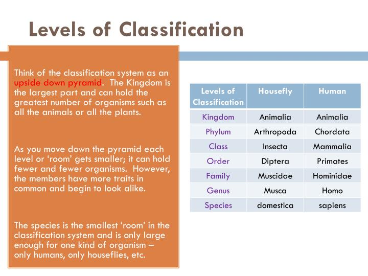 Levels of Classification
