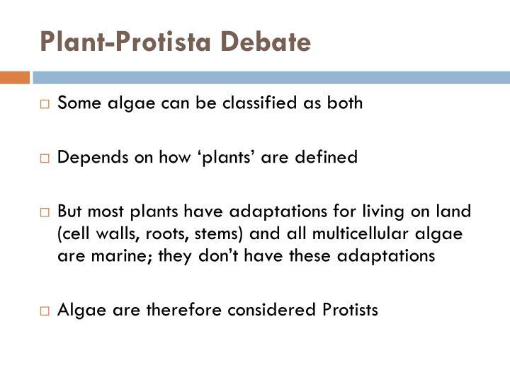 Plant-Protista Debate