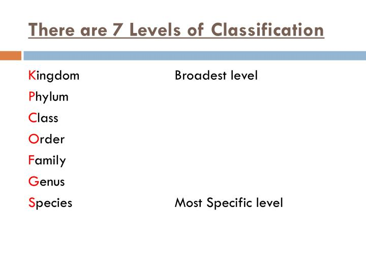 There are 7 Levels of Classification