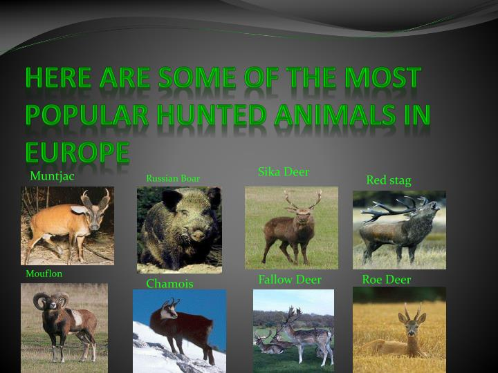 Here are some of the most popular hunted animals in Europe