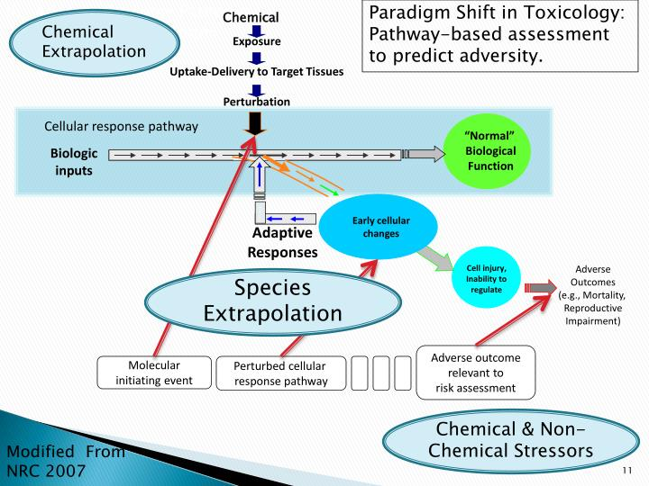 Adverse Outcome Pathways – definition and example