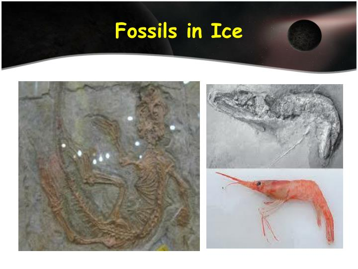 Fossils in Ice