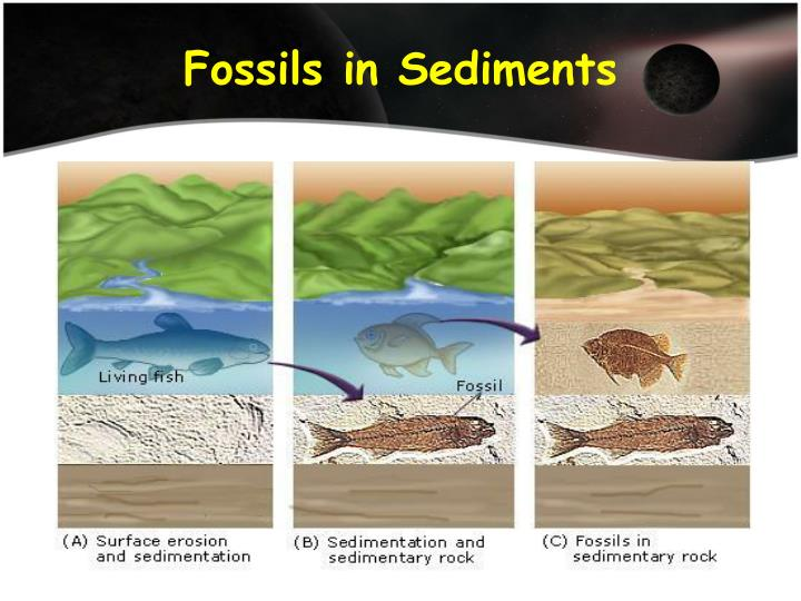 Fossils in Sediments