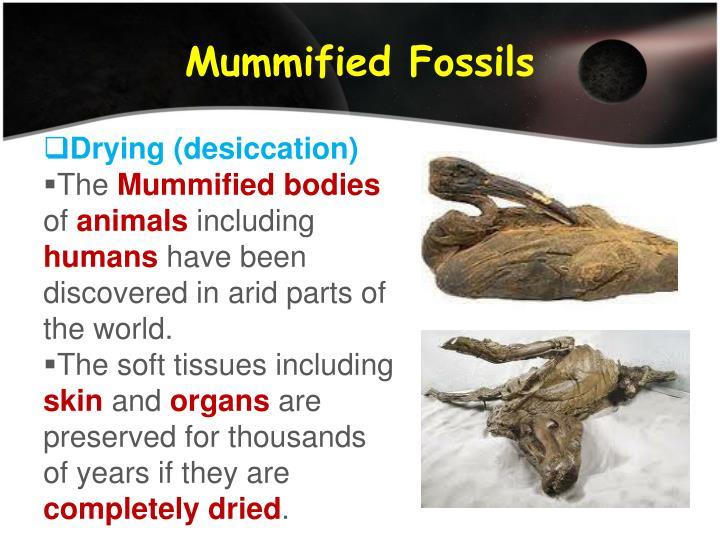 Mummified Fossils
