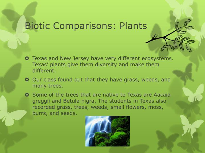 Biotic Comparisons: Plants