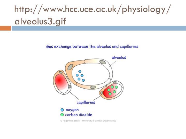 http://www.hcc.uce.ac.uk/physiology/alveolus3.gif