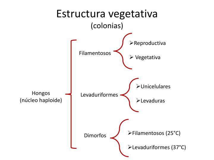 Estructura vegetativa