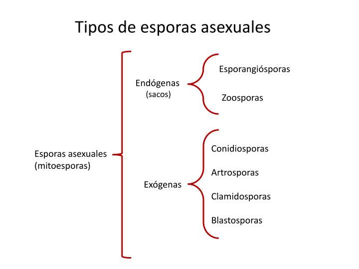 Tipos de esporas asexuales