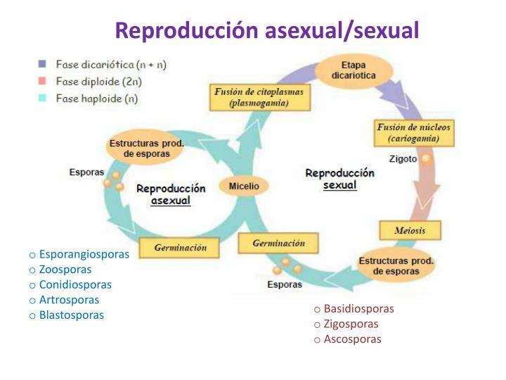 Reproducción asexual/sexual
