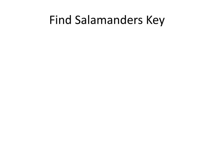 Find Salamanders Key