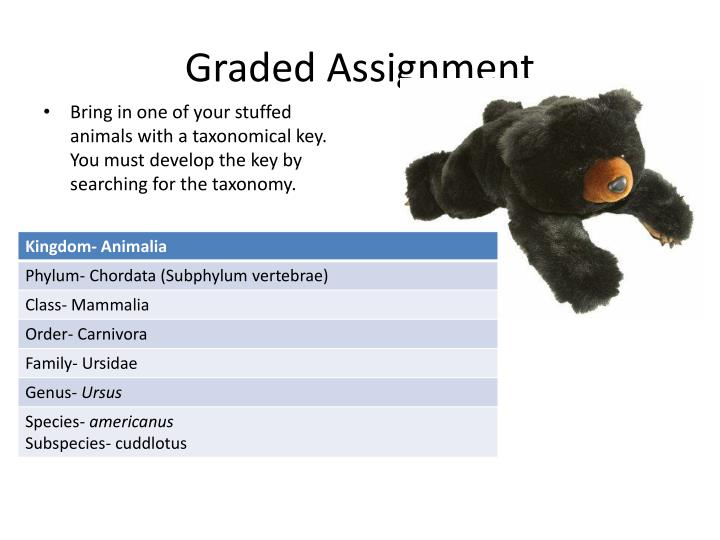 Graded Assignment
