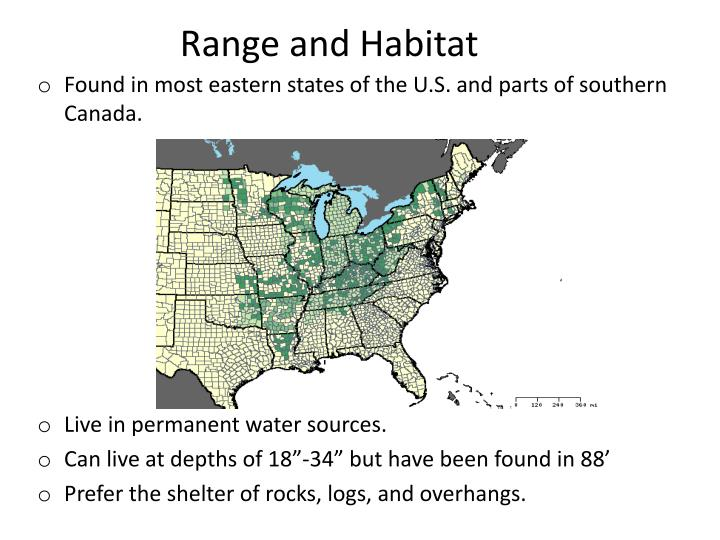 Range and habitat