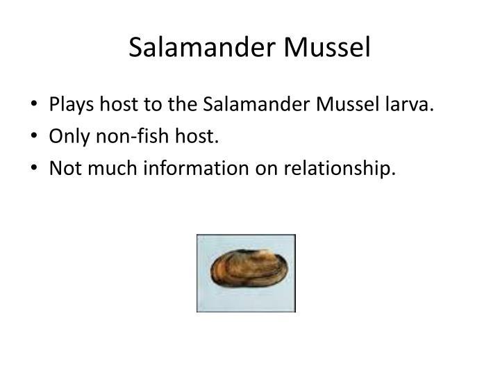 Salamander Mussel