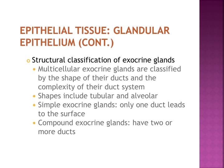 EPITHELIAL TISSUE: GLANDULAR EPITHELIUM (cont.)