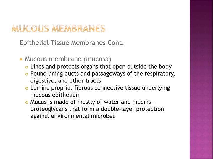 Mucous Membranes