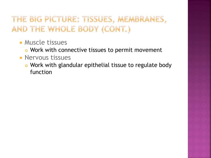 THE BIG PICTURE: TISSUES, MEMBRANES, AND THE WHOLE BODY (cont.)