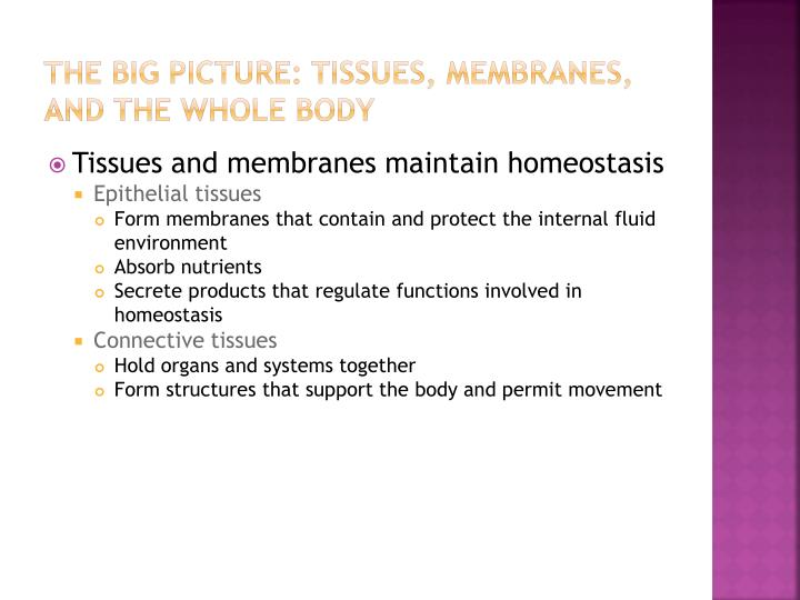 THE BIG PICTURE: TISSUES, MEMBRANES, AND THE WHOLE BODY