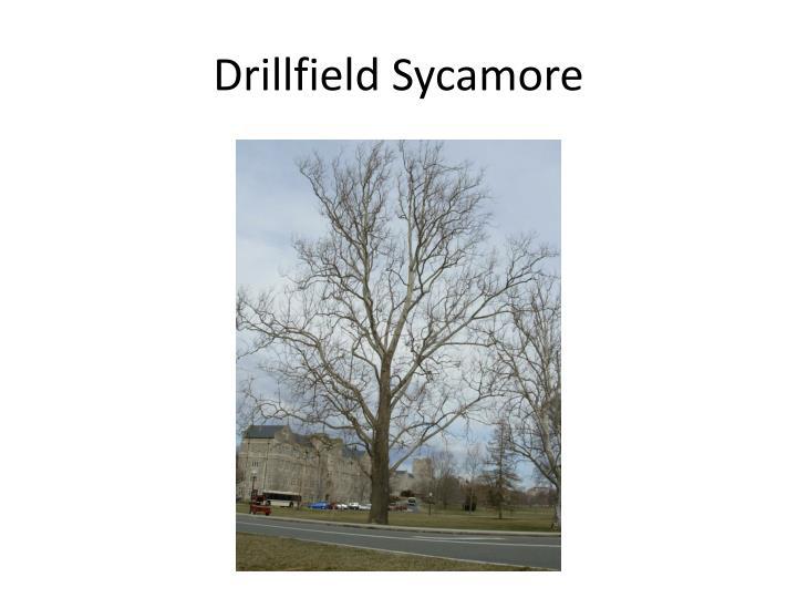 Drillfield