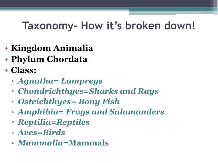 Taxonomy- How it's broken down!