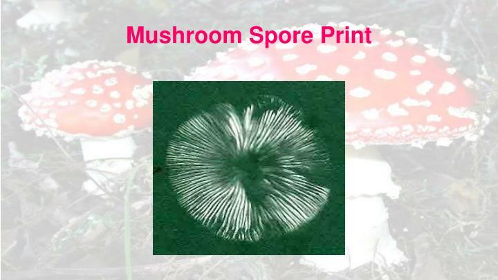 Mushroom Spore Print