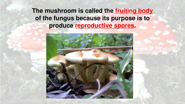 The mushroom is called the