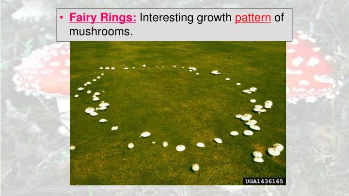 Fairy Rings: