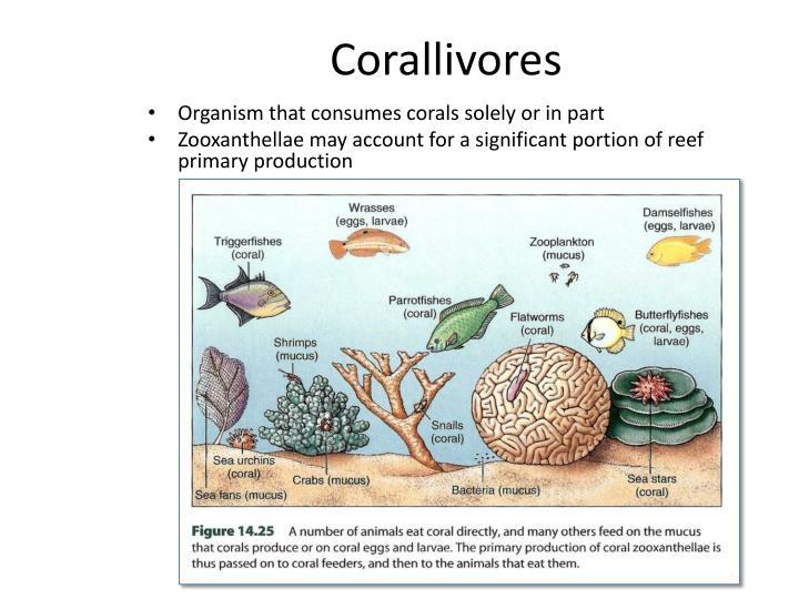 Corallivores