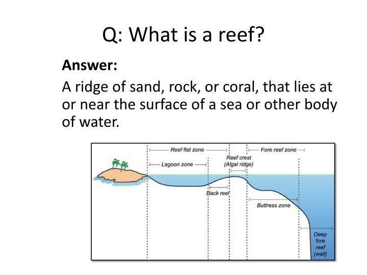 Q: What is a reef?