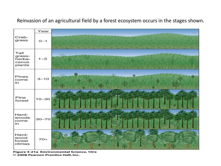Reinvasion of an agricultural field by a forest ecosystem occurs in the stages shown.