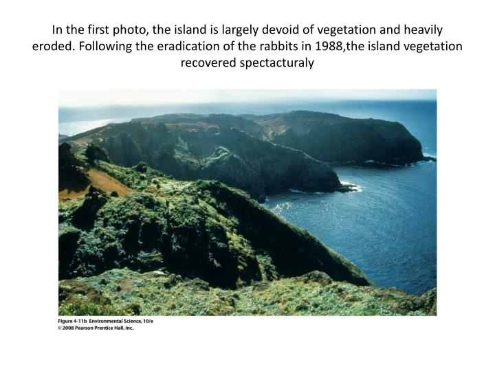 In the first photo, the island is largely devoid of vegetation and heavily eroded. Following the eradication of the rabbits in 1988,the island vegetation recovered