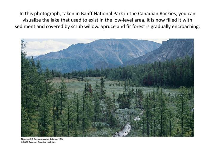 In this photograph, taken in Banff National Park in the Canadian Rockies, you can visualize the lake that used to exist in the low-level area. It is now filled it with sediment and covered by scrub willow. Spruce and fir forest is gradually encroaching.