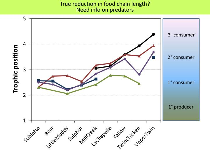 True reduction in food chain length?