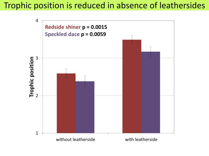 Trophic position is reduced in absence of leathersides