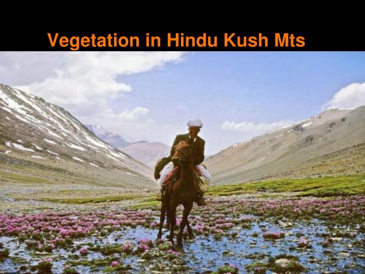 Vegetation in Hindu Kush Mts