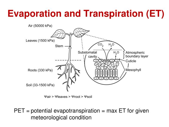 Evaporation and Transpiration (ET)