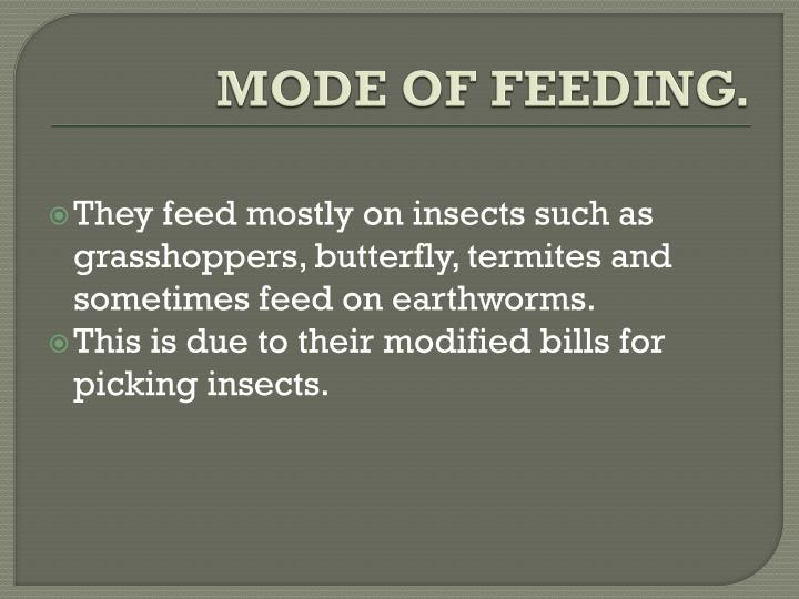 MODE OF FEEDING.