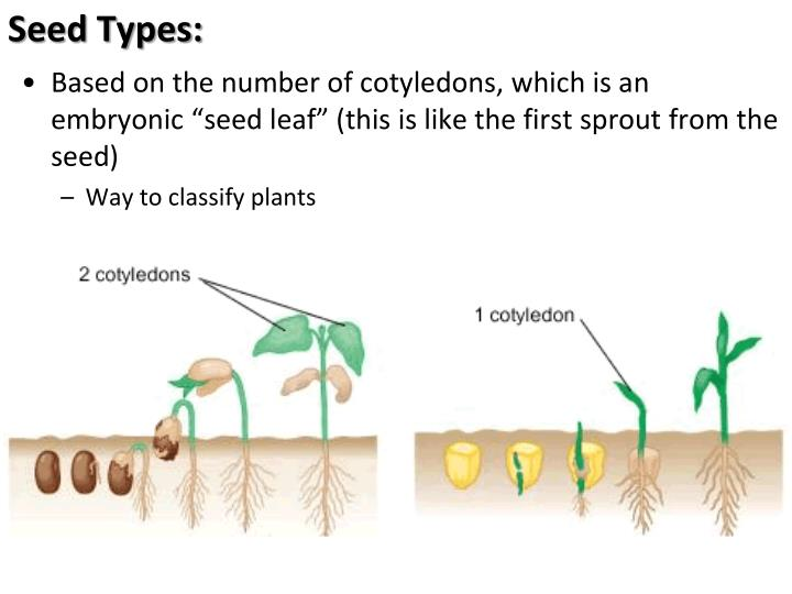 Seed Types:
