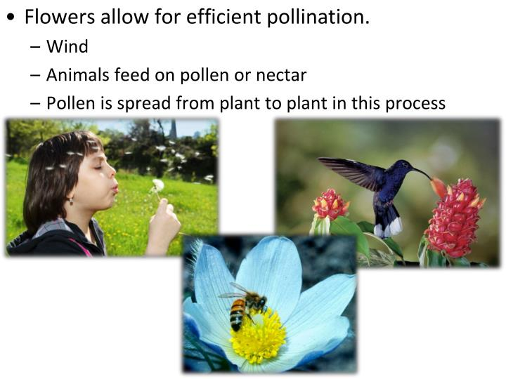 Flowers allow for efficient pollination.